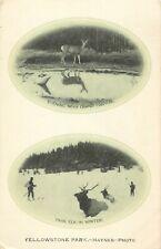 Scarce 1907 Haynes Yellowstone Postcard, Double Oval, Evening / Deer & Park Elk