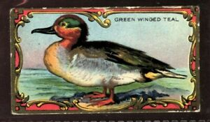 Tobacco Card, Imperial Canada, GAME BIRD SERIES, 1925, The Teal, #20