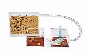 Ameisenfarm Mini Kit (Ameisen mit Königin FREE)(Ant farm, Formicarium, Ants)