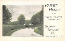 Mechanicsville Iowa~Graham Nursery~Privet Hedge~Campbell Des Moines~1910 Adv PC