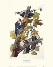 Pileated Woodpecker by John James Audubon Canvas Giclee