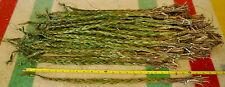 "5 Canadian Sweetgrass Braids 24"" Long"