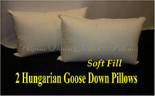 2 NEW HUNGARIAN GOOSE DOWN SOFT PILLOWS  KING  FILL POWER 100% COTTON COVER