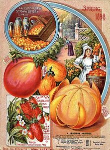 Botanical Poster Salzer Fruit Poster Print A4 Kitchen Wall Deco 1898