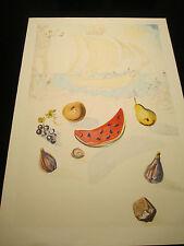 Salvador Dali / Farblithographie / signiert