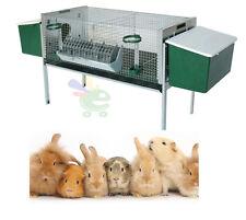 Conigliera completa di 2 nidi + mangiatoie e abbeveratoi per conigli fattrici