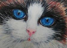ACEO ORIGINAL RAGDOLL CAT big blue eyes animal kitty realistic details by EMMA