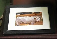 Photo 5 x 7 and framed Photography Fine Art Print Signed on back of print Cows