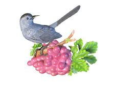 Grape Vine Lenox.com Bird on