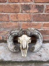 More details for extra large ram skull