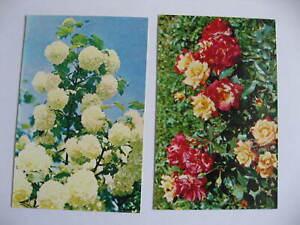 Sowjetunion, AK, Ansichtskarten: 2 Karten mit Blumen, Moskau 1973