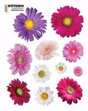 Aufkleber Sticker Wandsticker Wandaufkleber Blumen Lila Gerbera Kamille Fenster