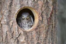 """Nesthole - Wooden Bird House Size: 1 1/8"""" - 1 1/4"""" (S) Type B"""
