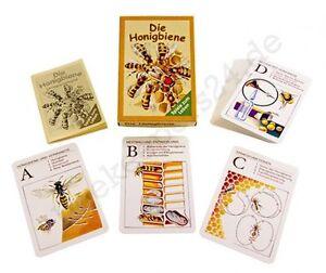 """Lernquartettspiel """"Die Honigbiene"""" im Karton, Bienen Lehrquartett, Kartenspiel"""