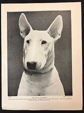 "1934 Dog Print / Bookplate - BULL TERRIER, Head Study Champion ""Mitsu Dannebrog"""