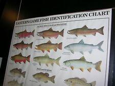 "1994 Eastern Game Fish Identification Wall Chart Fishing 37 Illustrations 23x36"""