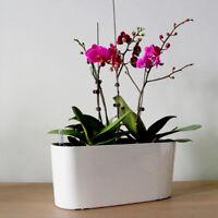 Self Watering Planter Plastic Plant Pot Modern Decor Flower Pot/Window Box