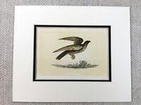 1853 Antico Stampa Falcon Falconeria Uccelli Di Preda Originale Vittoriano Art