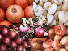 ONION 'Heirloom Mix' 100+ seeds HEIRLOOM vegetable garden WINTER season veggie