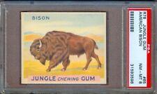 1930 R78 JUNGLE GUM #65 AMERICAN BISON PSA 8 POP 1! HIGHEST GRADED!
