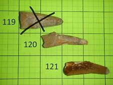 Dinosaur Spinosaur Tooth Teeth-Morocco-#119, #120, #121  Pick the one you want