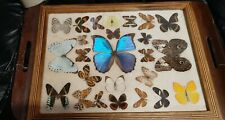 Framed Butterfly Collection