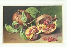 137906 stupenda cartolina artistica frutta di s. bonelli