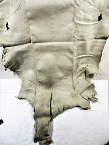 PROFESSIONALLY TANNED WHITETAIL DEER HIDE, #13