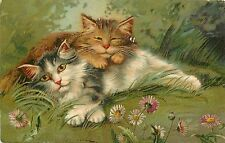 c1906 IAPC Postcard Series 475; Boulanger Cuddling Cats Lie among the Daisies