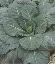 Collards Vates Vegetable Seeds