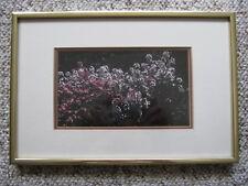 "Professional Photograph - Wildflowers - Frame & Mats, 8""' x 12""' - c. 1980"