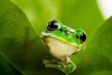 VLIES Fototapete-FROSCH-(2830ah)-Natur Reptilien Wandbild Dekoration