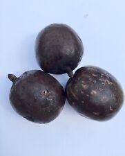 Bismarck Seeds (qty 25)