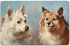 PORTRAIT DE CHIENS.  DOGS.