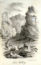 """""""Animated Nature"""" by Goldsmith -1838- DEER STALKING"""