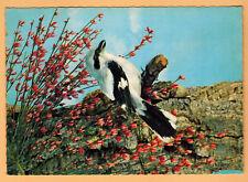 Carte Postale-Raubwürger-Pie grièche Grise-Oiseaux-Bird-Ed.Germany