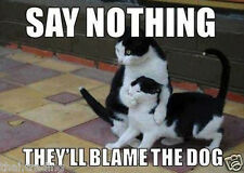 """Funny Cat Say Nothing They'll Blame Dog Photo Fridge Magnet 2""""x3"""" Collectibles"""
