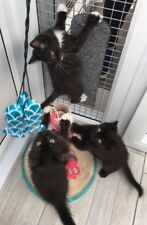 Cats Protection Carmarthenshire - Please help feed our rescue kittens