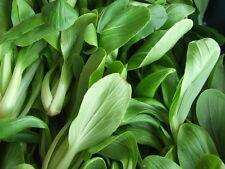 4000 Seeds, Green Pak Choy,Brassica Chinensis, Home Garden, Thai Food menu