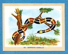 NATURAMA - Lampo 1968 - Figurina-Sticker n. 158 - SERPENTE CORALLO -Rec