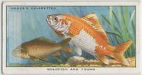 Stages Of Goldfish Color Changes 85+ Y/O Trade Card