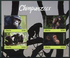 Liberia 2019 Mnh Chimpanzees 4v M/S Mammals Apes Wild Animals Stamps