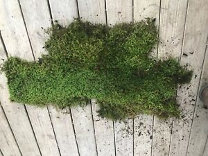 "Fresh/Dried  #A grade Appalachian Mountain Moss 36"" x 24""  MORE SIZES AVAILABLE"