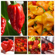 Ghost Pepper Carolina Reaper Trinidad Moruga Scorpion Hot Chili Seeds Combo Pack