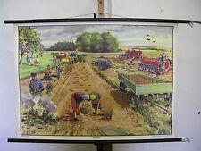 Belle ancienne schulwandbild pommes de terre Bauer Cadeau Anniversaire 90x64 vintage