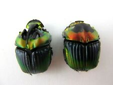 Sulcophanaeus imperator PAIR Metallic Taxidermy REAL Insect Beetles