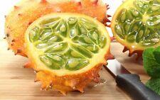 25+ Fresh Kiwano Melon Seeds ~ Exotic Vine and Melon *Free Us Shipping*