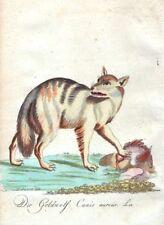 Etching Vintage Animals Art Prints