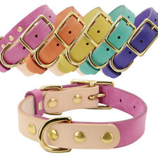 Soft Pet Dog Leather Collars with Gold Buckle for Small Puppy Cat French Bulldog