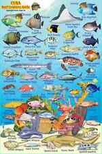 "Franko Cuba Reef Creatures Guide Laminated Fish Identification Card 4"" x 6"""